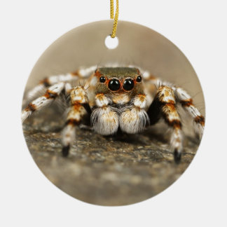 Tarantula Jumping Bird Spider awesome accessories Round Ceramic Decoration