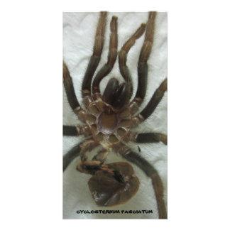 Tarantula Molt Card Photo Card