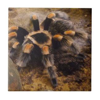 """Tarantula Small (4.25"""" x 4.25"""") Ceramic Photo Tile"""