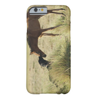Tarifa, Cadiz, Andalusia, Spain 2 Barely There iPhone 6 Case