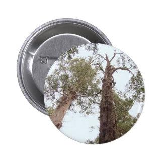 Tasmania Old trees reach for the sky 6 Cm Round Badge