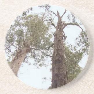 Tasmania Old trees reach for the sky Sandstone Coaster