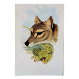 Tasmanian Wolf or Tiger Poster