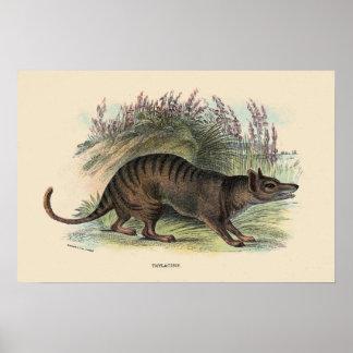 Tasmanian wolf poster