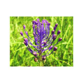 Tassel-Hyacinth Canvas Print