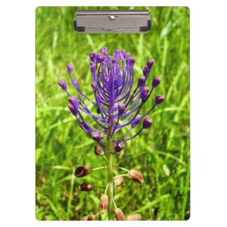 Tassel-Hyacinth Clipboard