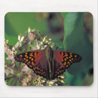 Tawny Emperor Butterfly on Common Milkweed Mouse Pad