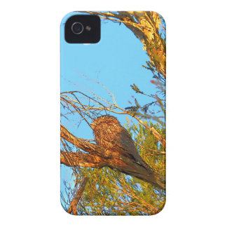 TAWNY FROGMOUTH ART QUEENSLAND AUSTRALIA iPhone 4 CASE