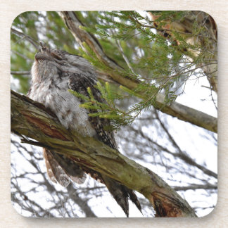 TAWNY FROGMOUTH OWL RURAL QUEENSLAND AUSTRALIA DRINK COASTERS