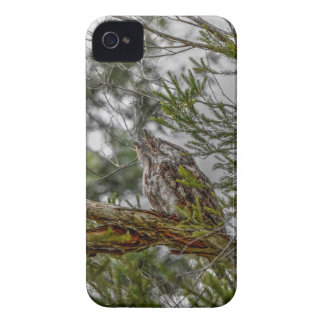 TAWNY FROGMOUTH OWL RURAL QUEENSLAND AUSTRALIA iPhone 4 Case-Mate CASE