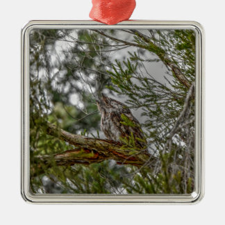 TAWNY FROGMOUTH OWL RURAL QUEENSLAND AUSTRALIA Silver-Colored SQUARE DECORATION