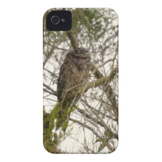 TAWNY FROGMOUTH QUEENSLAND AUSTRALIA iPhone 4 Case-Mate CASES