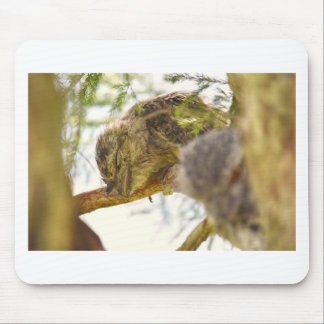 TAWNY FROGMOUTH QUEENSLAND AUSTRALIA MOUSE PAD