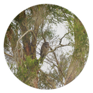 TAWNY FROGMOUTH QUEENSLAND AUSTRALIA PLATE