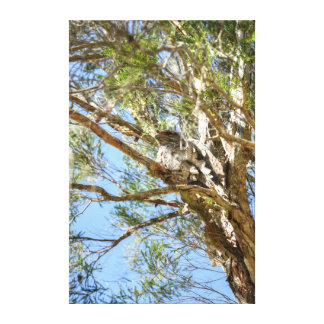 TAWNY FROGMOUTH RURAL QUEENSLAND AUSTRALIA CANVAS PRINT