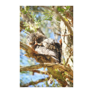TAWNY FROGMOUTH RURAL QUEENSLAND AUSTRALIA CANVAS PRINT