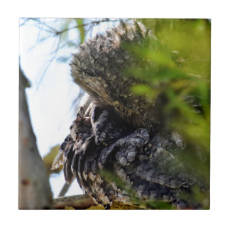 TAWNY FROGMOUTH RURAL QUEENSLAND AUSTRALIA CERAMIC TILE