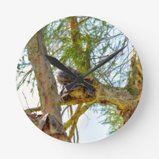 TAWNY FROGMOUTH RURAL QUEENSLAND AUSTRALIA CLOCK