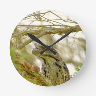 TAWNY FROGMOUTH RURAL QUEENSLAND AUSTRALIA CLOCKS