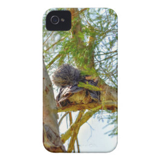 TAWNY FROGMOUTH RURAL QUEENSLAND AUSTRALIA iPhone 4 COVER