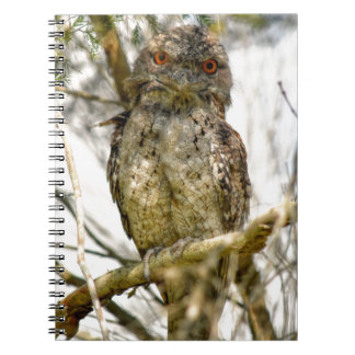 TAWNY FROGMOUTH RURAL QUEENSLAND AUSTRALIA NOTEBOOKS