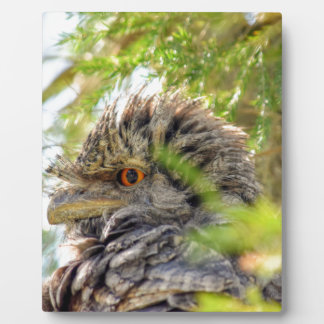TAWNY FROGMOUTH RURAL QUEENSLAND AUSTRALIA PLAQUE