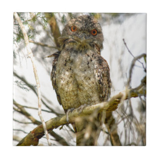TAWNY FROGMOUTH RURAL QUEENSLAND AUSTRALIA SMALL SQUARE TILE
