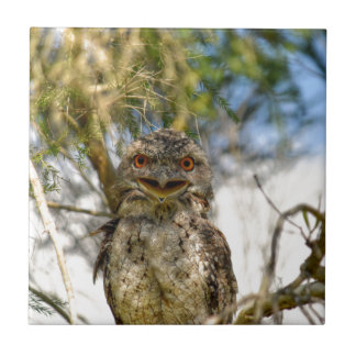 TAWNY FROGMOUTH RURAL QUEENSLAND AUSTRALIA TILE