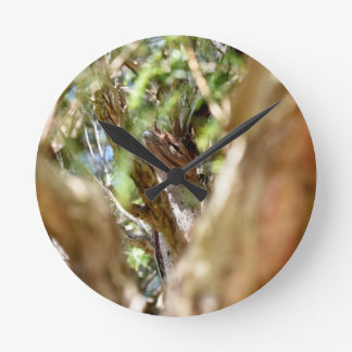 TAWNY FROGMOUTH RURAL QUEENSLAND AUSTRALIA WALLCLOCKS