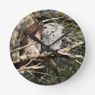 TAWNY FROGMOUTHS IN A TREE QUEENSLAND AUSTRALIA CLOCK