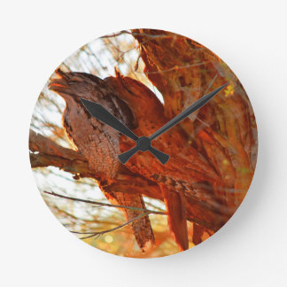 TAWNY FROGMOUTHS IN TREE QUEENSLAND AUSTRALIA CLOCK