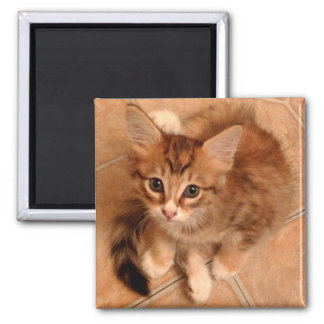Tawny Kitty Square Magnet