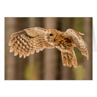 Tawny Owl in flight Card