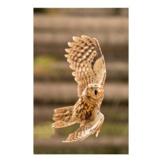 Tawny Owl in flight. Stationery