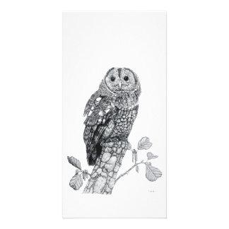 Tawny Owl - Photo Card
