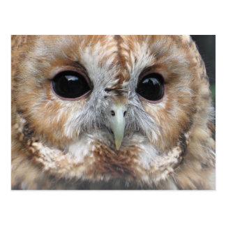 Tawny owl postcard