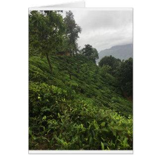 Tea Plantation Card