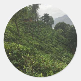 Tea Plantation Classic Round Sticker