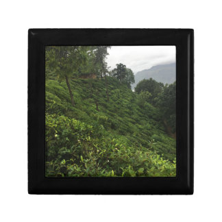 Tea Plantation Gift Box
