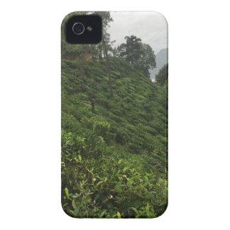 Tea Plantation iPhone 4 Case