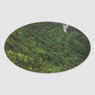 Tea Plantation Oval Sticker