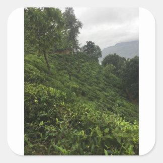 Tea Plantation Square Sticker