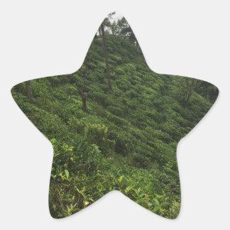 Tea Plantation Star Sticker