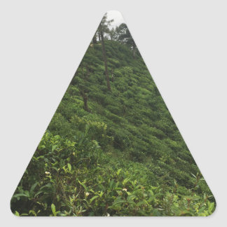 Tea Plantation Triangle Sticker