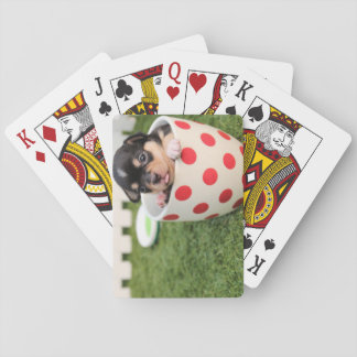 Teacup Chihuahua Puppy Playing Cards