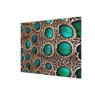 Teal Spotted pheasant feather Canvas Print