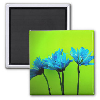 Teal Turquoise Daisies on Lime Green Flowers Gifts Magnets