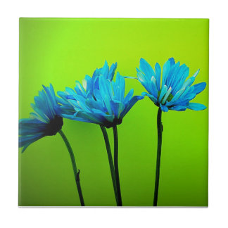 Teal Turquoise Daisies on Lime Green Flowers Gifts Small Square Tile
