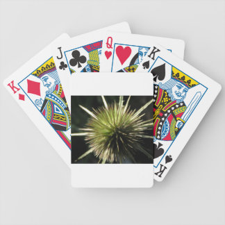 Teasel on display bicycle playing cards