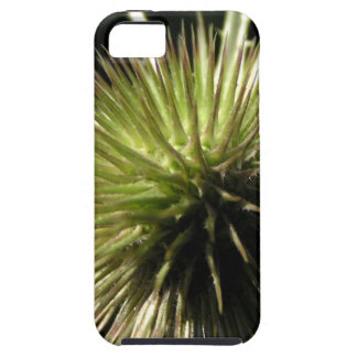 Teasel on display iPhone 5 covers
